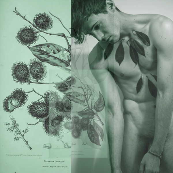 asongofseeds-collaged-8
